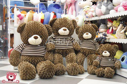 Teddy socola