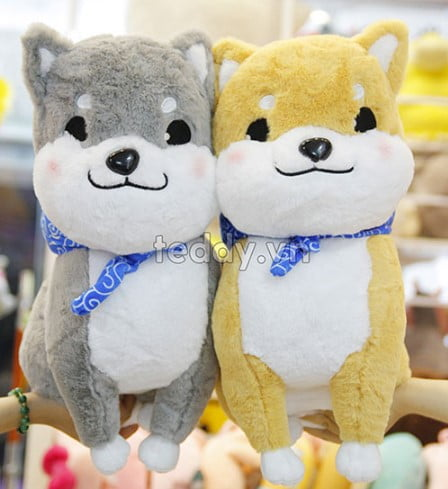 Chó bông xù Nhật siêu đáng yêu tại teddy.vn