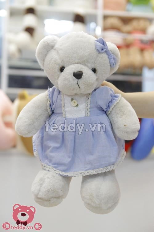 Hình ảnh mẫu gấu teddy nhỏ nhất baby