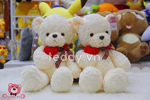 Gấu bông Teddy giá bao nhiêu - Gấu Teddy Chính Hãng