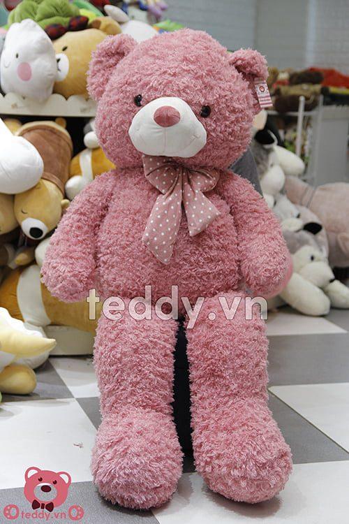 Teddy Xù