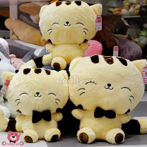 Mèo Vàng Mặt Lớn Bông