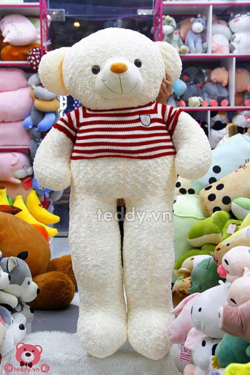 Gấu Bông Teddy X