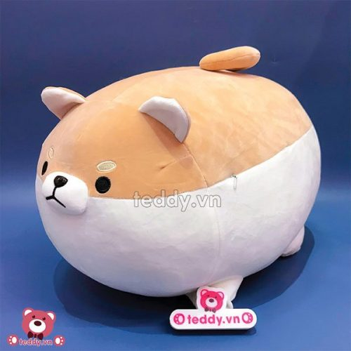Chó Bông Corgi tròn